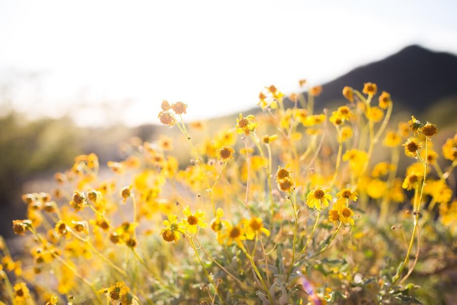 5 Reasons To Love Living In Grantsville, Utah